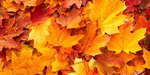 Natural-Autumn-Leaves